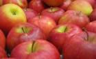 Jabuka, ravno iz raja stigla